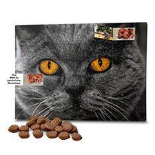 Katzen-Adventskalender