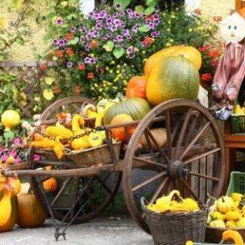 Herbstdeko – Anregungen und Tipps zum selber machen
