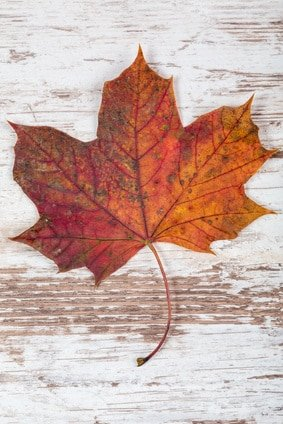 Herbstliche Platzkarten selbst gestalten