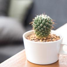 Dekorieren mit Tassen – 10 kreative Upcycling-Ideen mit altem Porzellan