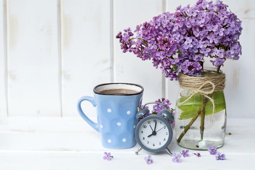 Uberblick Wann Bluhen Welche Blumen